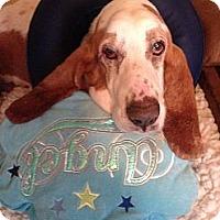 Adopt A Pet :: Tres - Columbia, SC