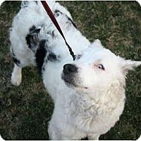 Adopt A Pet :: KayCee - Blooming Prairie, MN