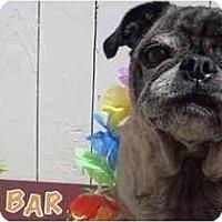 Adopt A Pet :: Mr. Puppy-VA - Suffolk, VA