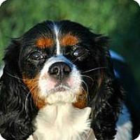 Adopt A Pet :: Malcolm MacGregor - Austin, TX