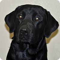 Adopt A Pet :: Jet - Port Washington, NY