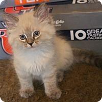 Adopt A Pet :: Rozzie - North Highlands, CA