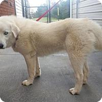Adopt A Pet :: Sasha - Berkeley Heights, NJ