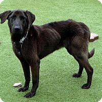 Adopt A Pet :: Chrissy - Buckeystown, MD