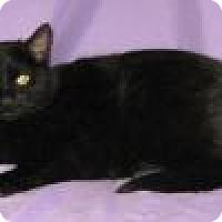 Adopt A Pet :: Reeta - Powell, OH