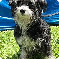 Adopt A Pet :: Reggie - Miami, FL