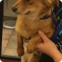 Adopt A Pet :: Chewy - Las Vegas, NV