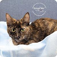 Adopt A Pet :: charlie - Apache Junction, AZ