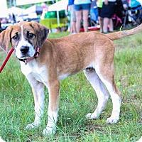 Adopt A Pet :: Neo - New Oxford, PA
