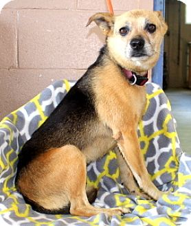 Shepherd (Unknown Type) Mix Dog for adoption in Willingboro, New Jersey - Laney