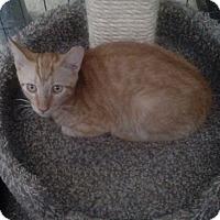 Adopt A Pet :: Milo - YOUNGTOWN, AZ