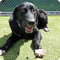 Adopt A Pet :: Midnight #5 - Falls Church, VA