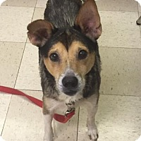 Adopt A Pet :: WILLOW - Amherst, OH
