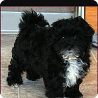 Adopt A Pet :: Bodie - Sherman Oaks, CA