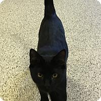 Adopt A Pet :: Dean - Siler City, NC