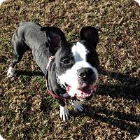 Adopt A Pet :: 1610-0839 Isaac - Virginia Beach, VA