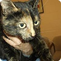 Adopt A Pet :: COCOA - Gloucester, VA