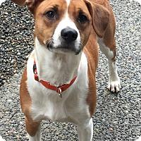 Adopt A Pet :: Finn - Auburn, WA