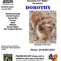 Adopt A Pet :: Dori-MISSING!!! - Arlington, TX