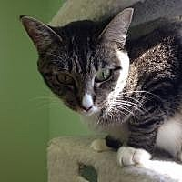 Adopt A Pet :: Harmony - Port Richey, FL