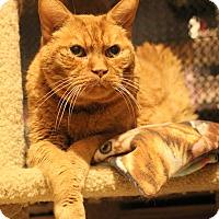 Adopt A Pet :: Tator - Carlisle, PA