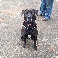 Adopt A Pet :: Adidas - Ball Ground, GA