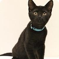 Adopt A Pet :: Prometheus - Sacramento, CA