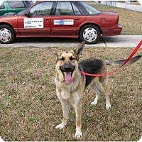 Adopt A Pet :: Iggy - Green Cove Springs, FL