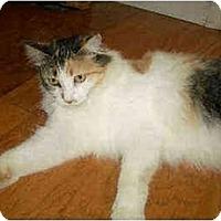 Adopt A Pet :: Calla - Davis, CA