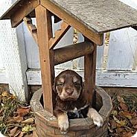Adopt A Pet :: Croc - Saskatoon, SK