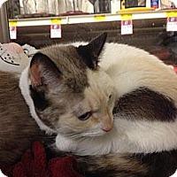 Adopt A Pet :: Nena - She's a 10! - East Hanover, NJ