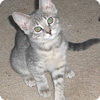 Adopt A Pet :: Nancie - Colmar, PA
