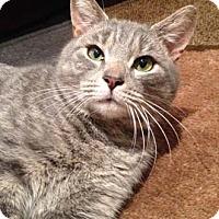 Adopt A Pet :: Leonidas - Merrifield, VA