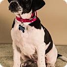 Adopt A Pet :: Yodel