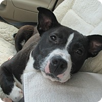 Adopt A Pet :: Marilyn - Orange Park, FL