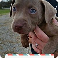 Adopt A Pet :: Charlie - Broken Arrow, OK