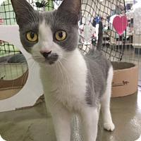 Adopt A Pet :: Sierra - Broomall, PA