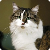 Adopt A Pet :: Chantilly - Kettering, OH