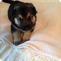 Adopt A Pet :: Sarah - Victorville, CA