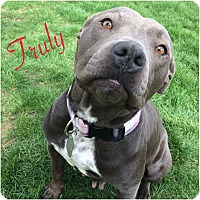 Adopt A Pet :: Truly - Dayton, OH
