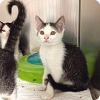 Adopt A Pet :: Petco A - Triadelphia, WV