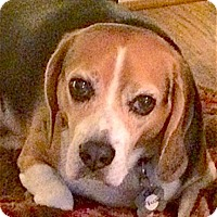 Adopt A Pet :: Chester - Houston, TX