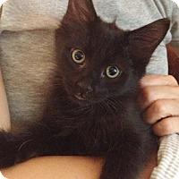 Adopt A Pet :: Maddux - North Highlands, CA