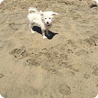 Adopt A Pet :: Melvin - Santa Ana, CA