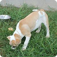 Adopt A Pet :: Gilligan - Marietta, GA
