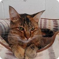 Adopt A Pet :: Gabby - Glenpool, OK