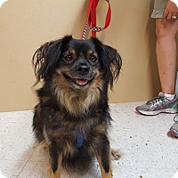 Adopt A Pet :: Scruffy - St John, IN