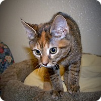 Adopt A Pet :: Trinity - Wilmington, OH