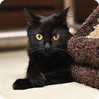 Adopt A Pet :: Broadway - Lowell, MA