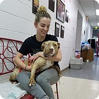 Adopt A Pet :: Winky - Elyria, OH